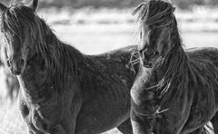 Band of Brothers - Photography of Wild Horses(Special 1stdibs Price)