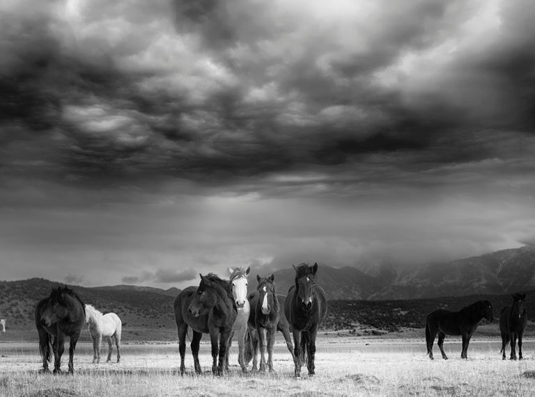 """This is a contemporary black and white photograph of American Wild Mustangs.  """"They represent the ultimate expression of American freedom"""" - Wild Horses 36x48 Edition of 12. Signed by artist.  This image comes frame as part of out 1stdibs promotion."""
