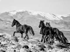 Mountain Top Mustangs Black and White Photography,Wild Horses 36x48