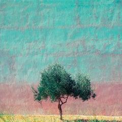 Athens - Fine Art Photography, Landscape, Tree, Contemporary, Art, Roger Grasas