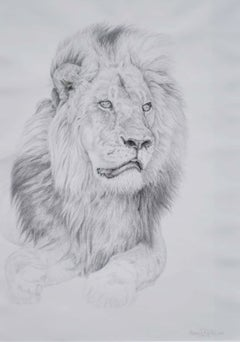 Study of a Lion - Wildlife, Drawing, Contemporary, Lion, Realist
