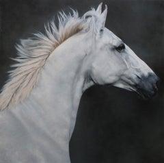 Equus 3