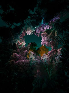 Illuminated Dendrology - Pink Matter