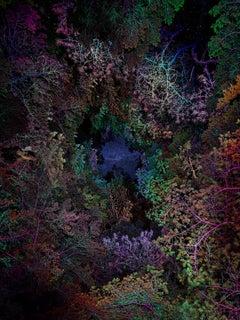 Illuminated Dendrology - Tunneling 3