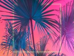 Palms Squared