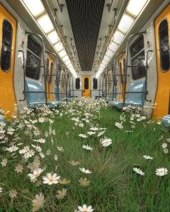 The Return of Nature Train