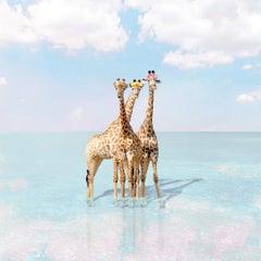 Giraffe Bay
