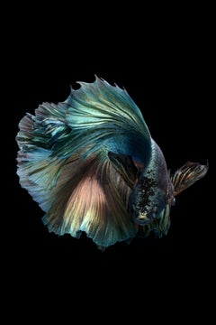 Symphony no. 9 : photography on glossy paper, portrait of nature, fish, vibrant