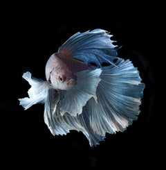 Interlude of the Blue : photographic paper, portrait of nature, blue and black
