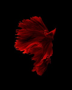 Africa : abstract photography, portrait of nature, contemporary, red and black