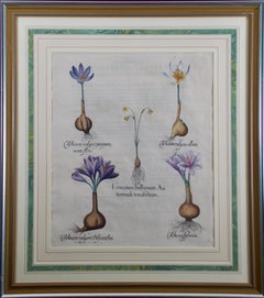 Besler Botanical Engraving of Autumn Snowflake and Meadow Saffrons Flowers