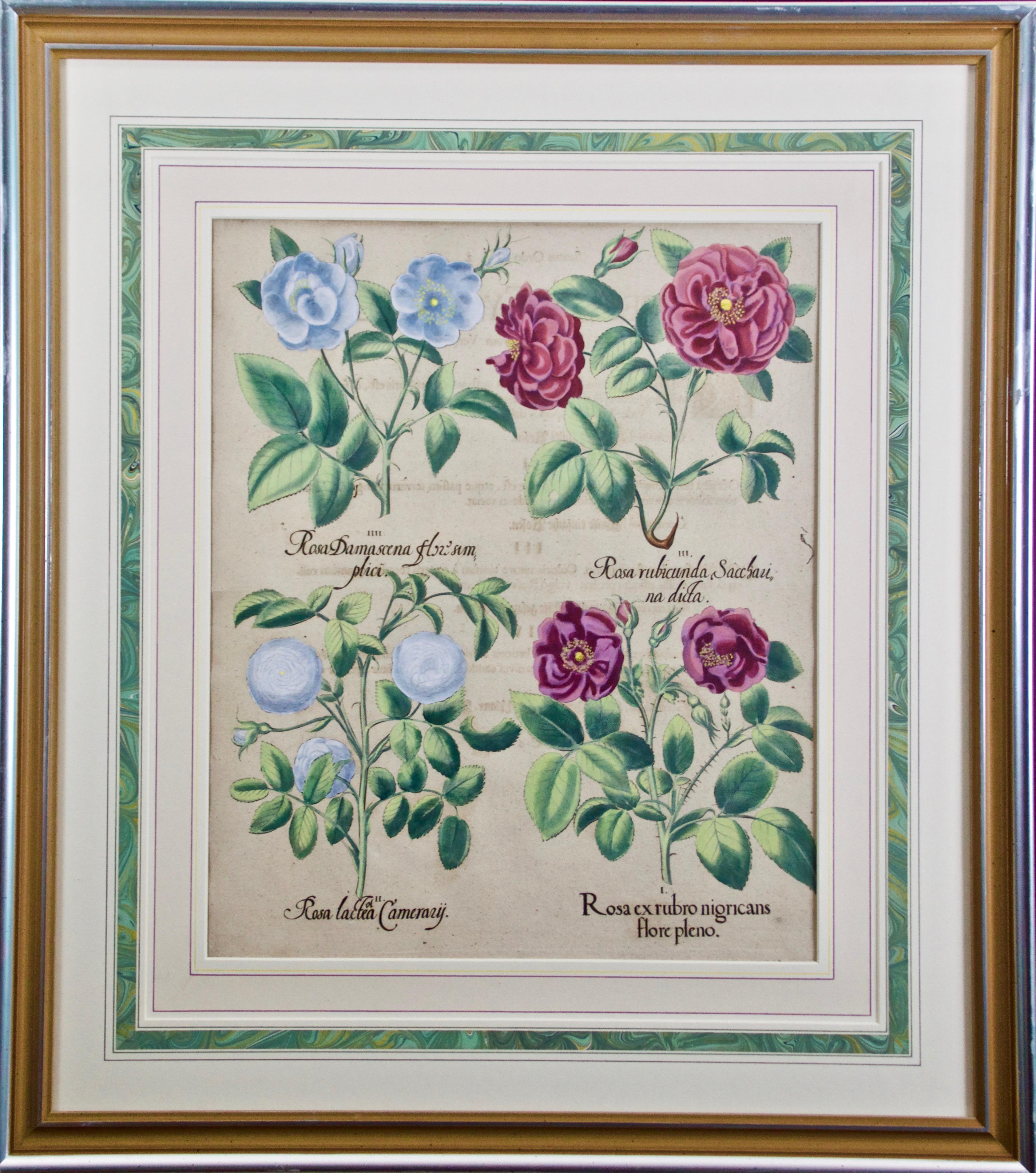 """Besler """"Rosa ex rubro"""" (Red Roses), 17th C. Hand Colored Botanical Engraving"""
