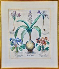 Besler Hand Colored Botanical Engraving of Maritime Squill, Crocus & Liverleaf