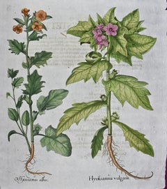 Besler 18th Century Hand-colored Botanical Engraving of Flowering Henbane