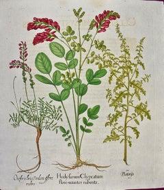 Besler 18th Century Hand-colored Botanical Engraving of Flowering Hedyfarum