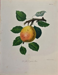 19th Century Hand-colored Engraving of a Red Doyenne Pear by Sir William Hooker