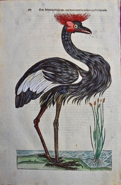 A 16th/17th Century Hand-colored Engraving of a Crowned Heron Bird by Aldrovandi