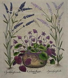 Besler Hand-colored Botanical Engraving of Flowering Cyclamen & Lavender Plants