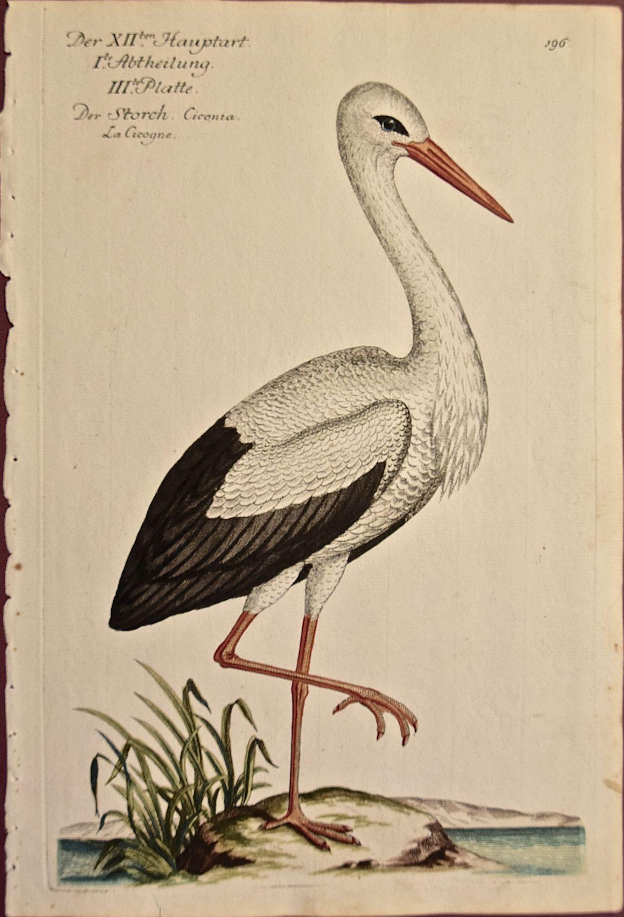 """An 18th Century Hand-colored Frisch Engraving """"Storch Ciconia"""" or White Stork"""