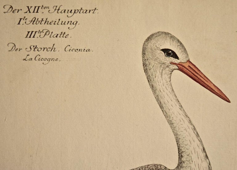 An 18th Century Hand-colored Frisch Engraving