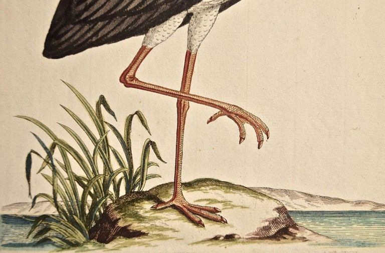 A rare 18th Century hand-colored copperplate engraving entitled