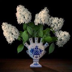 Hydrangeas in a Dutch Tuliperie