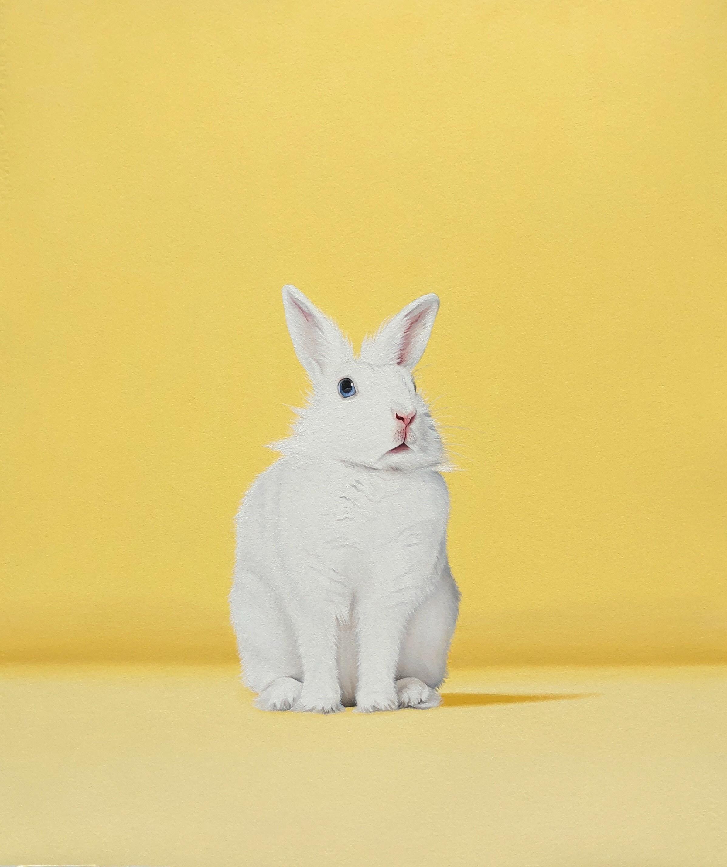 White Rabbit Yellow