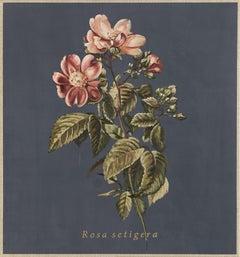 Rosa setigera