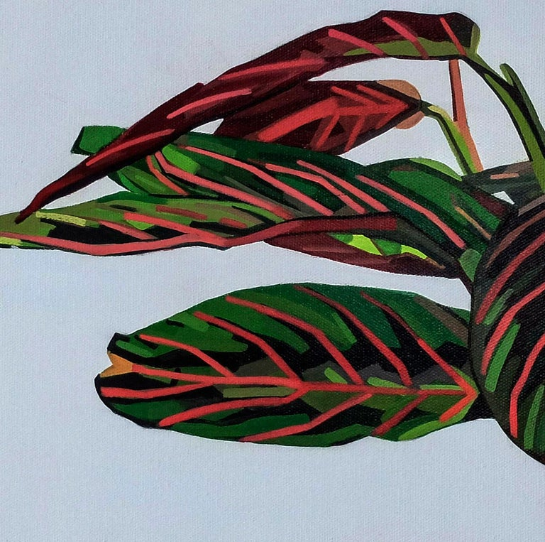 Maranta Tricolour - Contemporary Still Life Painting by Donald Maclean For Sale 3