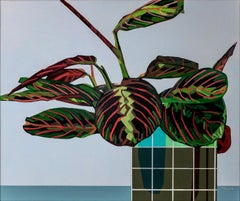 Maranta Tricolour - Contemporary Still Life Painting by Donald Maclean