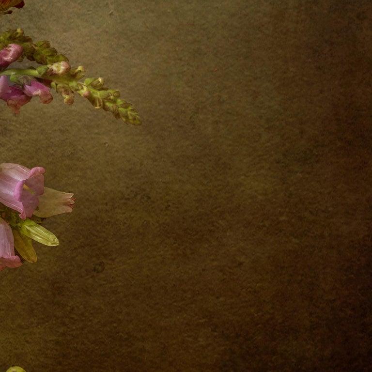 Photography Dibond Flowers Still Life Colour For Sale 6
