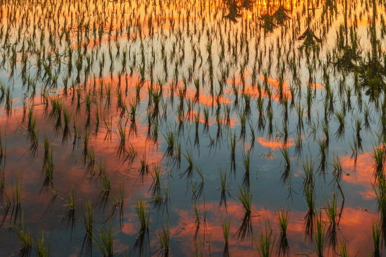 Bali, Asia - Photography Dibond Travel  Landscape Nature Ricefield Sunset Colour For Sale 8