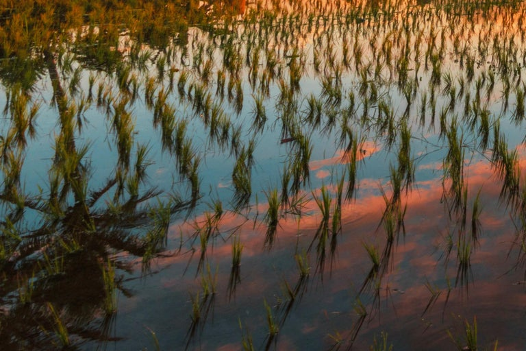 Bali, Asia - Photography Dibond Travel  Landscape Nature Ricefield Sunset Colour For Sale 7