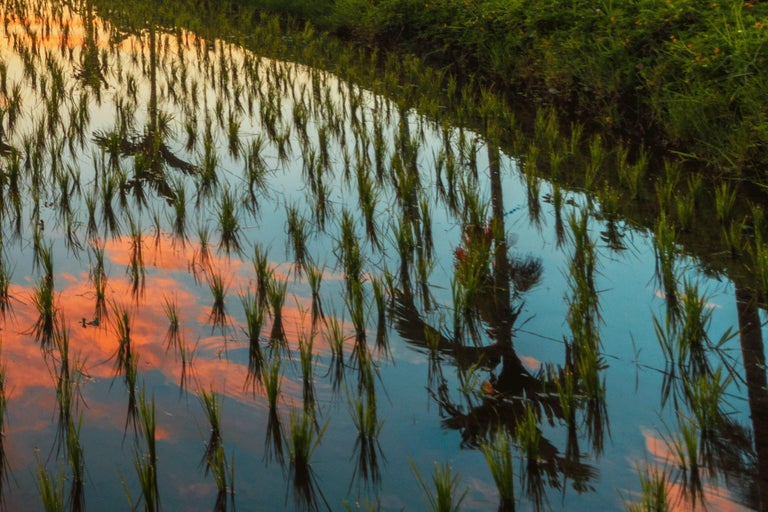 Bali, Asia - Photography Dibond Travel  Landscape Nature Ricefield Sunset Colour For Sale 9