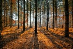 Photography Dibond Travel Forest Nature Sunrays