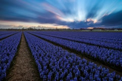 Dutch field with flowers - Photography Dibond Travel Nature Colour