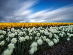 The Dutch flower fields - Travel Photography Dibond Nature Colour