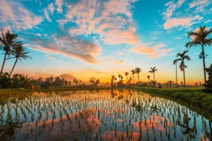 Bali, Asia - Photography Dibond Travel  Landscape Nature Ricefield Sunset Colour