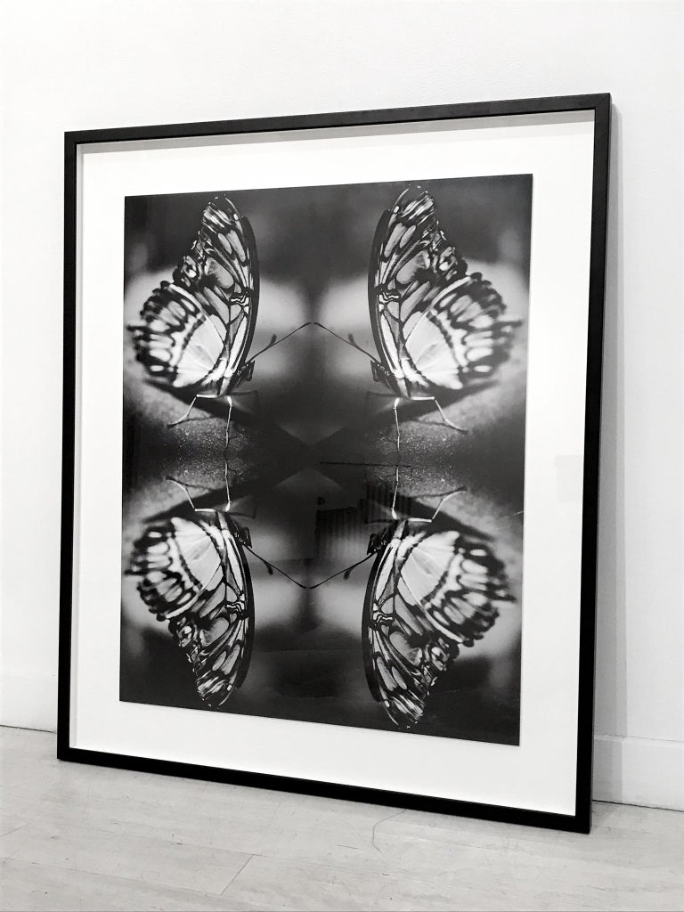 Papiliones No 1 Black White Photography Erfly Signed Framed