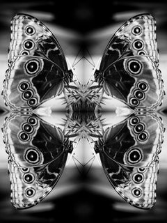 Papiliones No 2, Photography, Black and White, Butterfly, Signed, Framed