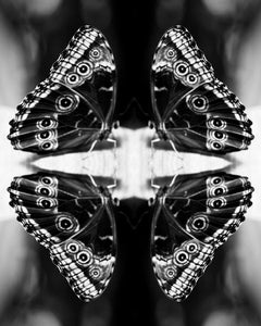 Papiliones No 4, Black and White, Photography, Butterfly Photography, Signed