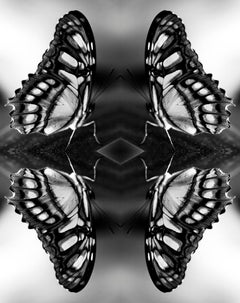 Papiliones No 5, Photography, Black and White, Butterfly, Signed, Framed