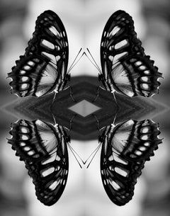 Papiliones No 8, Photography, Black and White, Butterfly, Signed, Framed