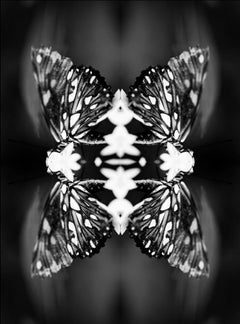 Papiliones No 9, Photography, Black and White, Butterfly, Signed, Framed