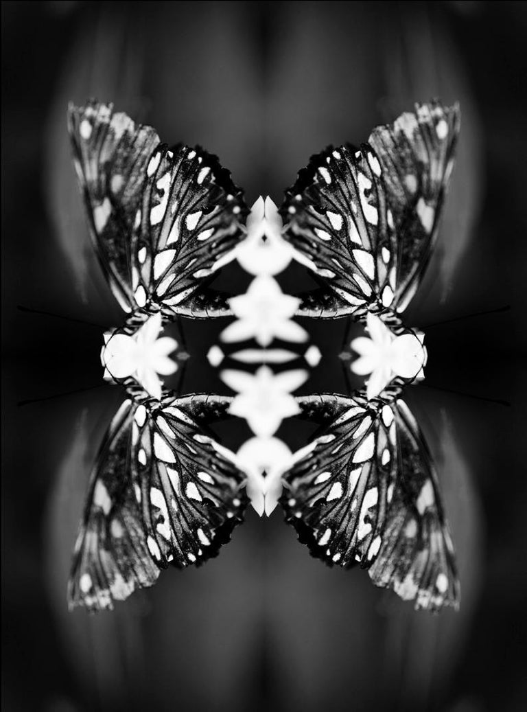 Papiliones no 9 photography black and white butterfly signed framed