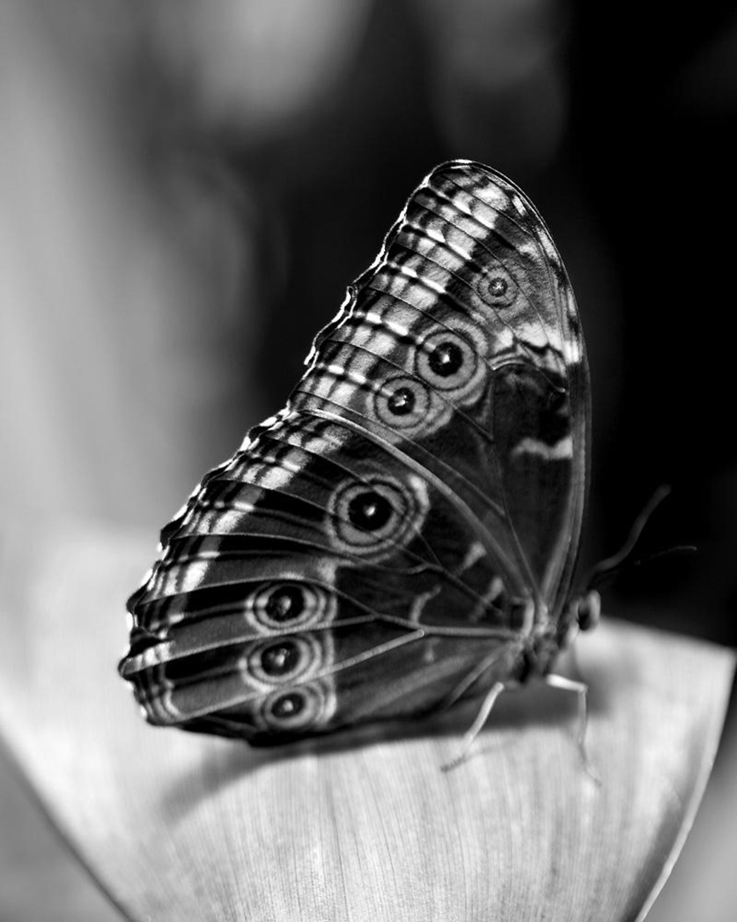 Self portrait as a butterfly no 1 photography black and white signed framed