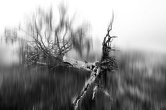 """Murder Of The Tree Of Souls (36 x 42"""") - Album: Tears Of Mother Earth - B&W"""