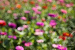 "The Drunken Garden (24 x 36"") - Album: Flowers - Contemporary - Colorful"