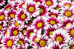 "Dizzy (24 x 36"") - Album: Flowers - Contemporary - Colorful"