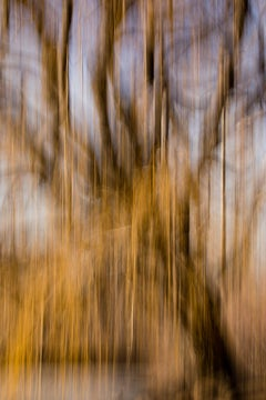 "Golden Tears (36 x 24"") - Album: In The Woods - Contemporary"